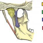 Time and the Temporomandibular Joints